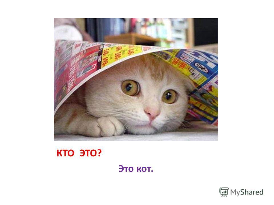 КТО ЭТО? Это кот.