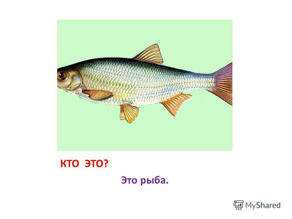 КТО ЭТО? Это рыба.