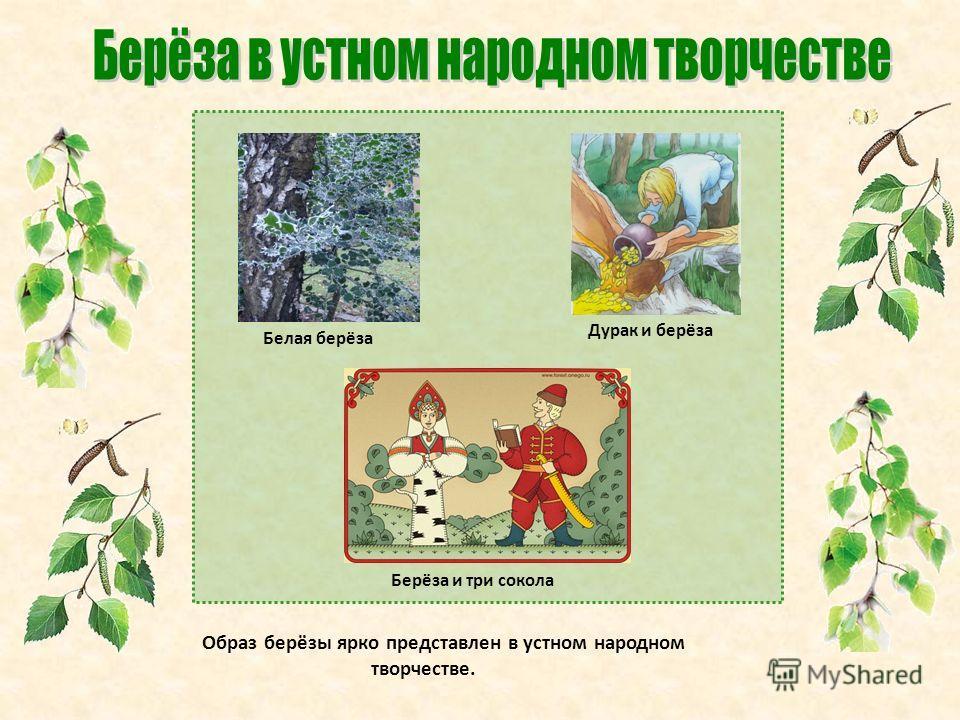 Белая берёза Дурак и берёза Берёза и три сокола Образ берёзы ярко представлен в устном народном творчестве.
