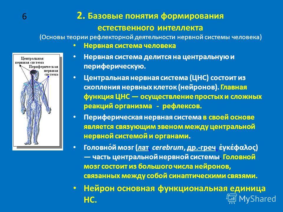 2. Базовые понятия формирования естественного интеллекта (Основы теории рефлекторной деятельности нервной системы человека) Нервная система человека Нервная система делится на центральную и периферическую. Центральная нервная система (ЦНС) состоит из