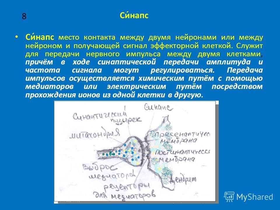 8 Си́на пс место контакта между двумя нейронами или между нейроном и получающей сигнал эффекторной клеткой. Служит для передачи нервного импульса между двумя клетками, причём в ходе синаптической передачи амплитуда и частота сигнала могут регулироват