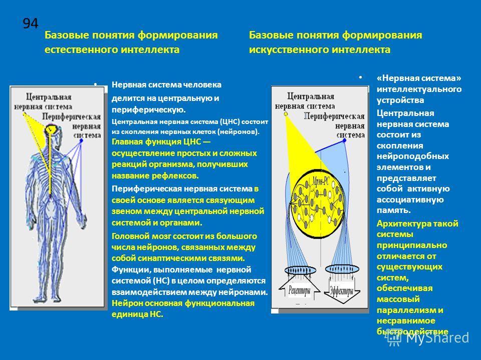Базовые понятия формирования естественного интеллекта Нервная система человека делится на центральную и периферическую. Центральная нервная система (ЦНС) состоит из скопления нервных клеток (нейронов). Главная функция ЦНС осуществление простых и слож