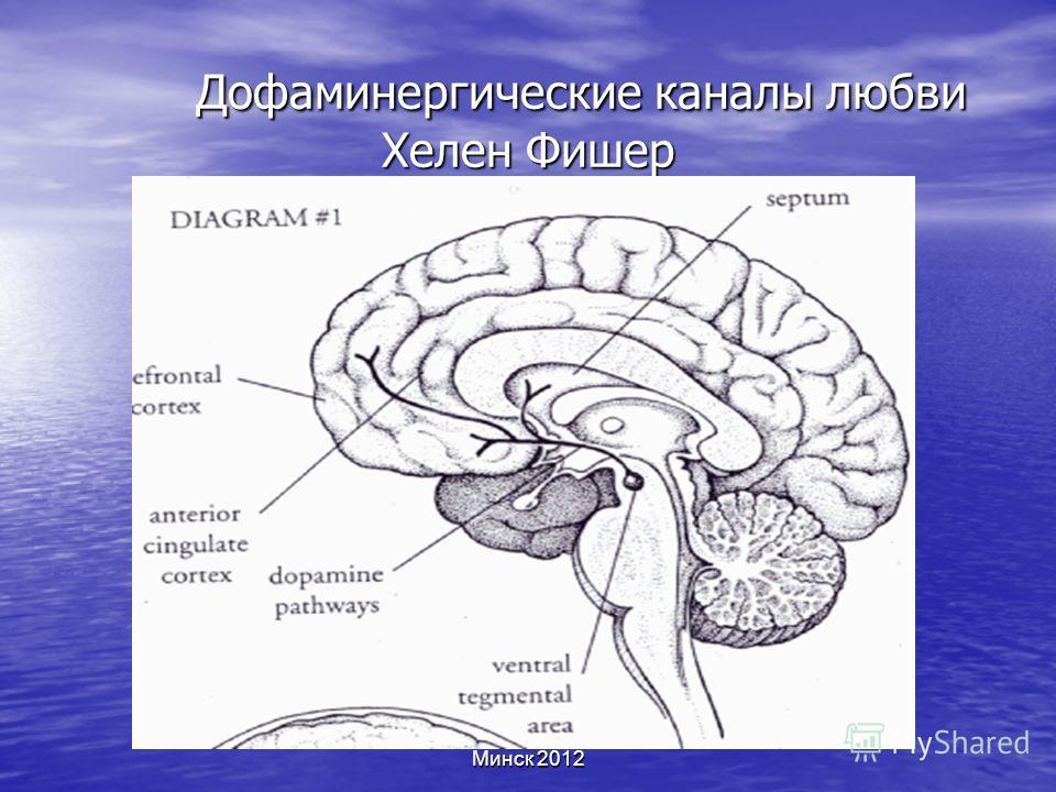 Минск 2012 Дофаминергические каналы любви Хелен Фишер