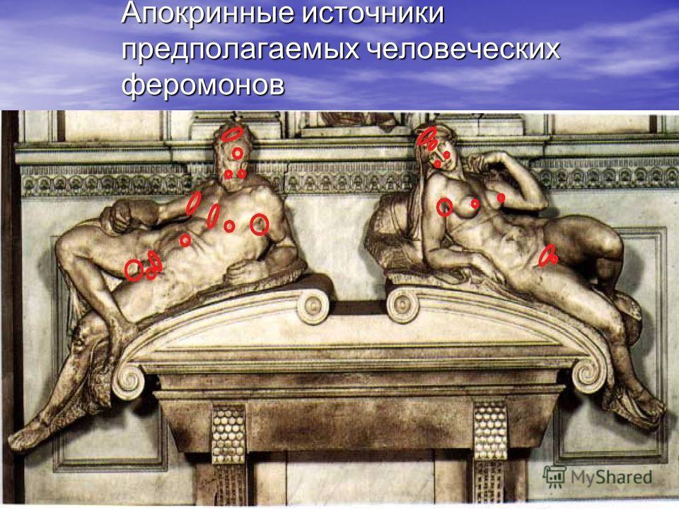 Минск 2008 Апокринные источники предполагаемых человеческих феромонов
