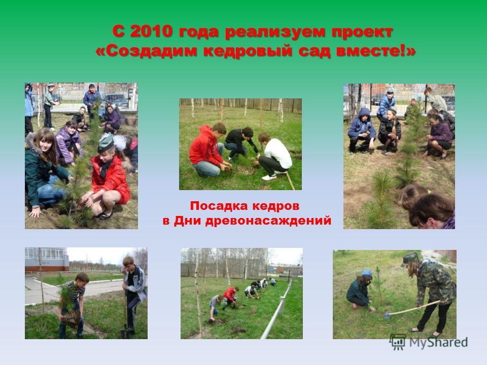 С 2010 года реализуем проект «Создадим кедровый сад вместе!» Посадка кедров в Дни древонасаждений