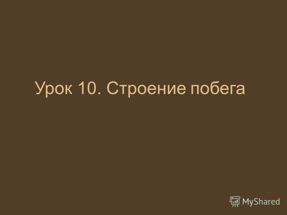 Урок 10. Строение побега