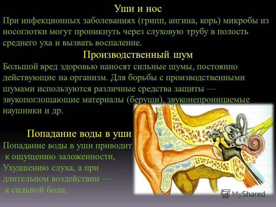Уши и нос При инфекционных заболеваниях (грипп, ангина, корь) микробы из носоглотки могут проникнуть через слуховую трубу в полость среднего уха и вызвать воспаление. Производственный шум Большой вред здоровью наносят сильные шумы, постоянно действую