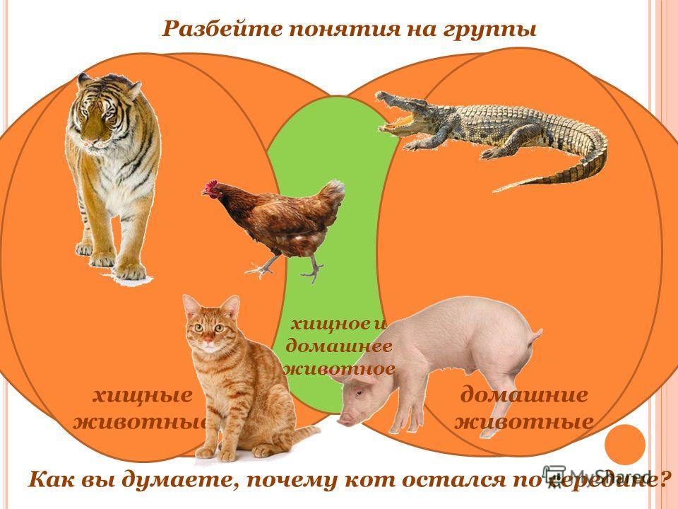 хищные животные Как вы думаете, почему кот остался по середине? домашние животные Разбейте понятия на группы хищное и домашнее животное