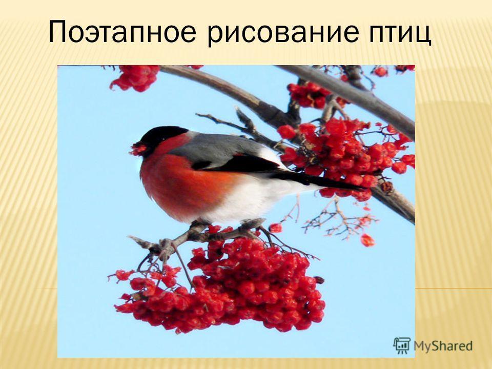 Поэтапное рисование птиц