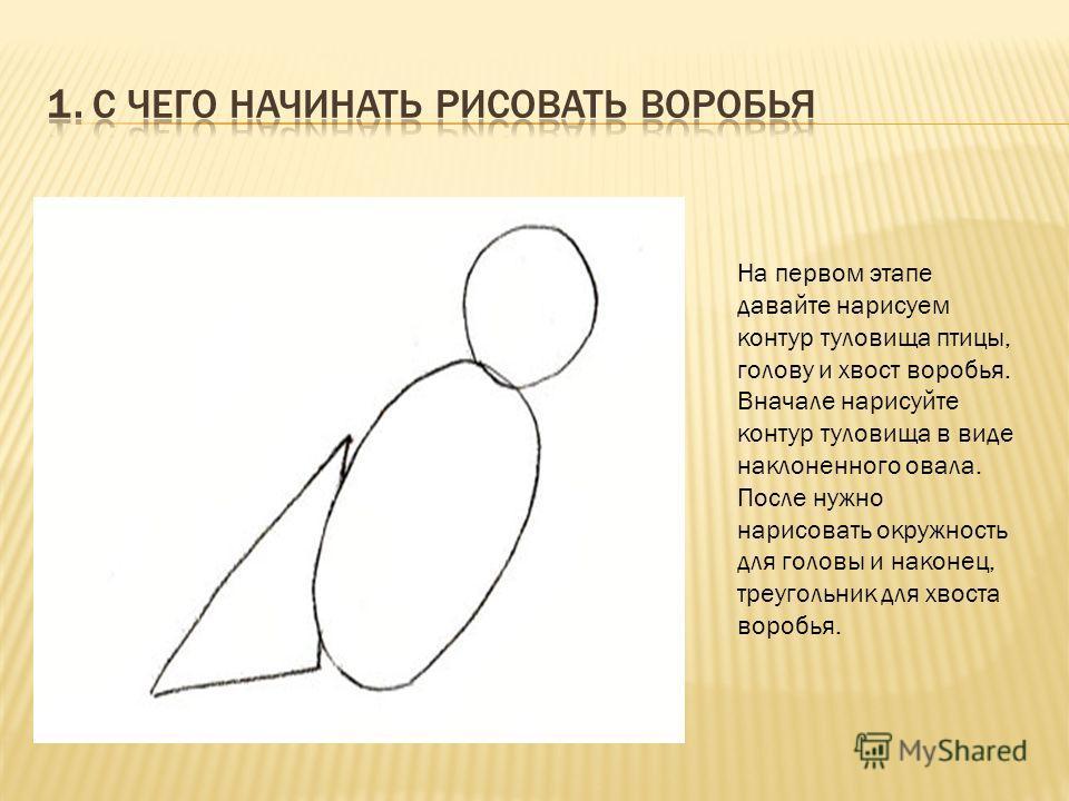На первом этапе давайте нарисуем контур туловища птицы, голову и хвост воробья. Вначале нарисуйте контур туловища в виде наклоненного овала. После нужно нарисовать окружность для головы и наконец, треугольник для хвоста воробья.