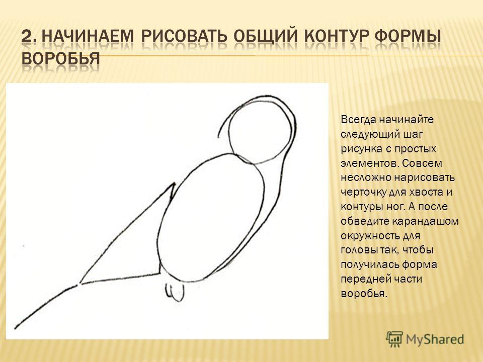 Всегда начинайте следующий шаг рисунка с простых элементов. Совсем несложно нарисовать черточку для хвоста и контуры ног. А после обведите карандашом окружность для головы так, чтобы получилась форма передней части воробья.