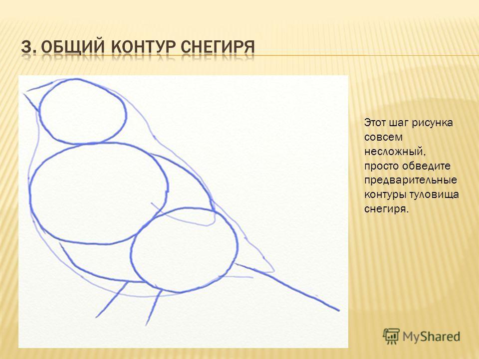 Этот шаг рисунка совсем несложный, просто обведите предварительные контуры туловища снегиря.