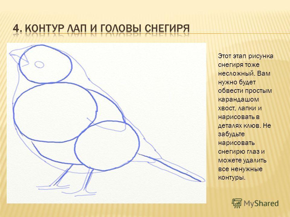 Рисунок птиц контур рисунка птицы