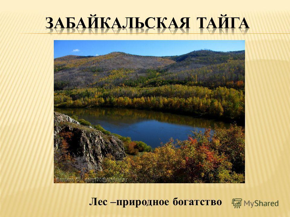 Лес –природное богатство