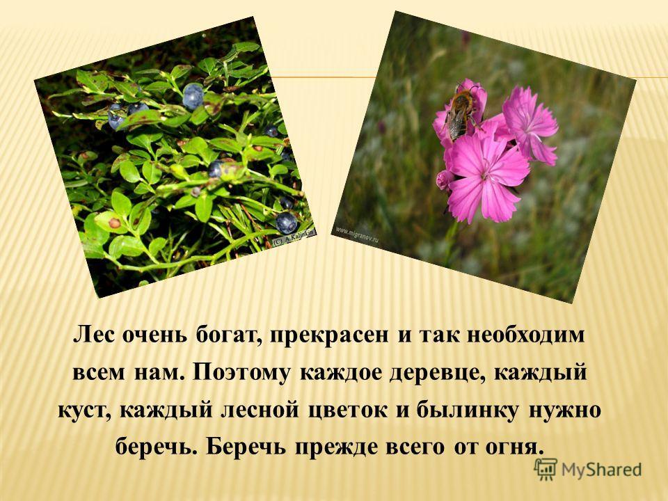 Лес очень богат, прекрасен и так необходим всем нам. Поэтому каждое деревце, каждый куст, каждый лесной цветок и былинку нужно беречь. Беречь прежде всего от огня.