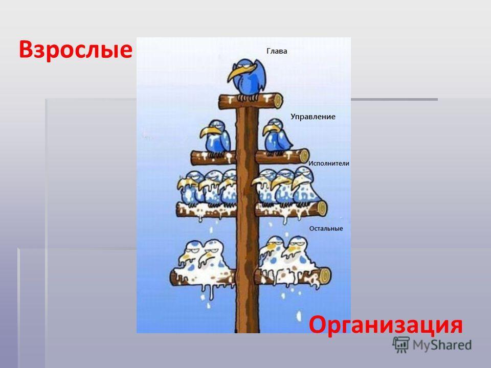 Взрослые Организация
