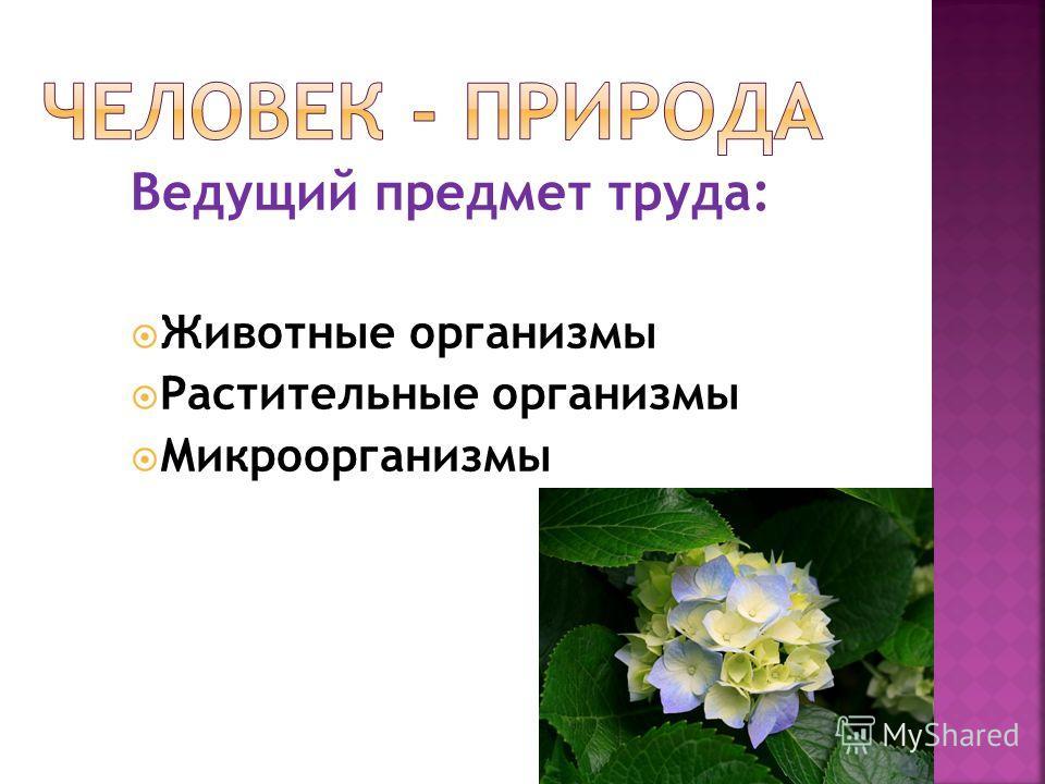 Ведущий предмет труда: Животные организмы Растительные организмы Микроорганизмы
