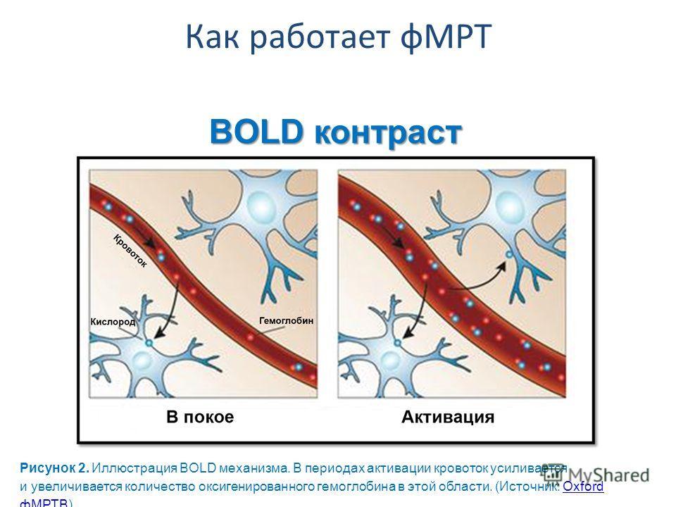 BOLD контраст Рисунок 2. Иллюстрация BOLD механизма. В периодах активации кровоток усиливается и увеличивается количество оксигенированного гемоглобина в этой области. (Источник: Oxford фМРТB)Oxford фМРТB Как работает фМРТ