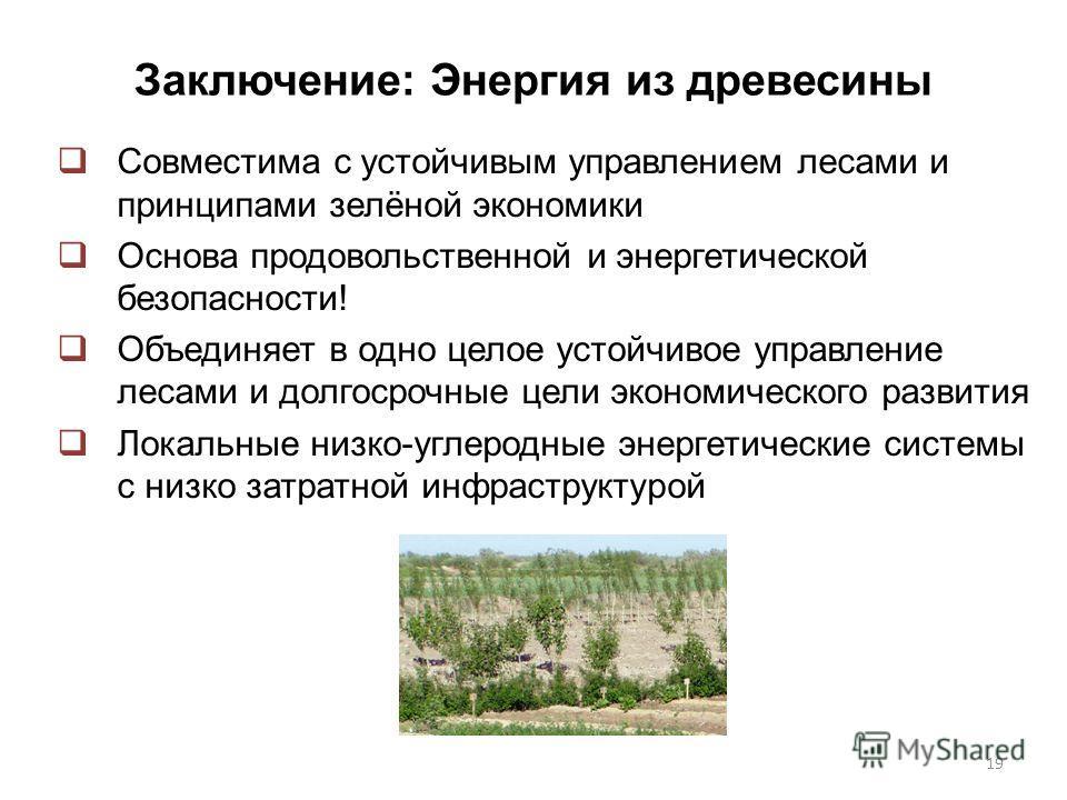 Заключение: Энергия из древесины Совместима с устойчивым управлением лесами и принципами зелёной экономики Основа продовольственной и энергетической безопасности! Объединяет в одно целое устойчивое управление лесами и долгосрочные цели экономического
