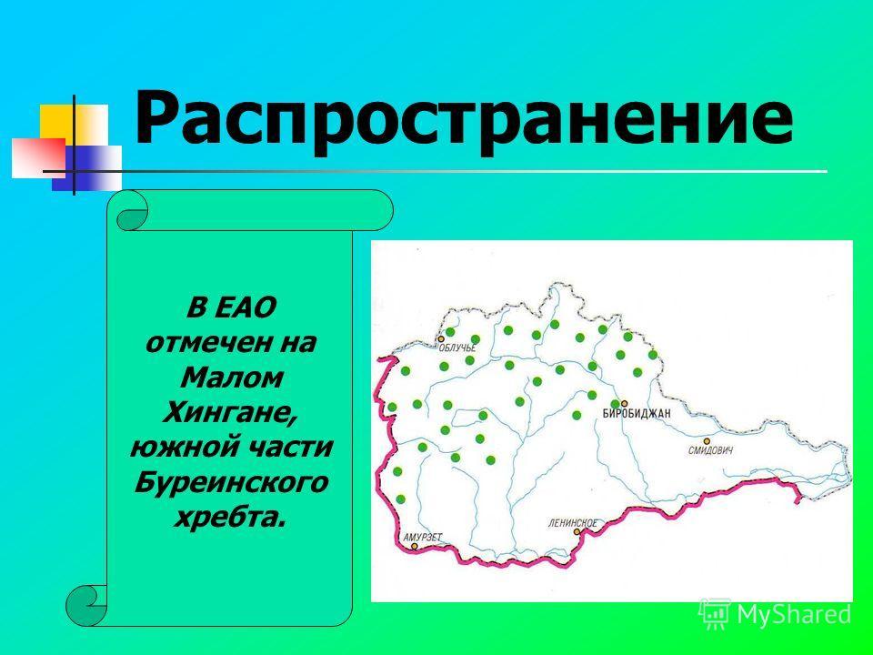 Распространение В ЕАО отмечен на Малом Хингане, южной части Буреинского хребта.