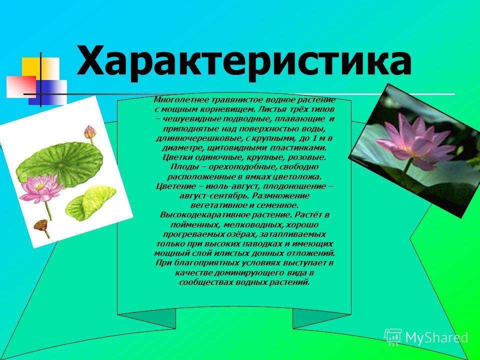 Характеристика Многолетнее травянистое водное растение с мощным корневищем. Листья трёх типов – чешуевидные подводные, плавающие и приподнятые над поверхностью воды, длинночерешковые, с крупными, до 1 м в диаметре, щитовидными пластинками. Цветки оди