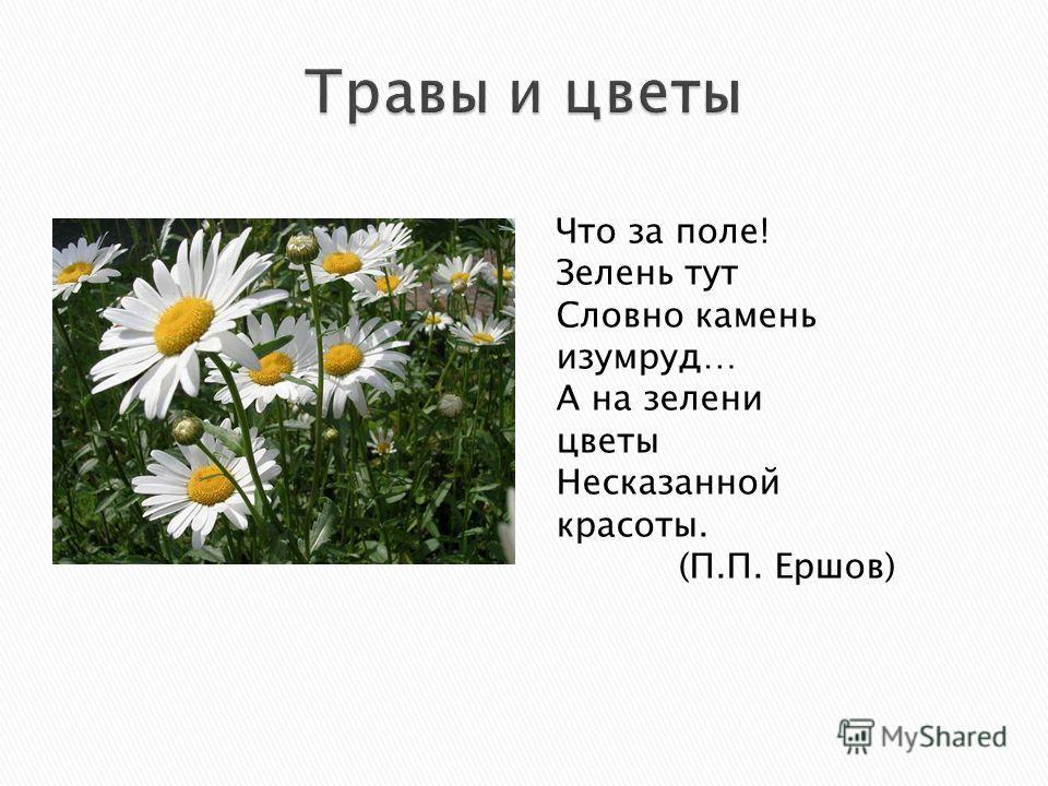 Что за поле! Зелень тут Словно камень изумруд… А на зелени цветы Несказанной красоты. (П.П. Ершов)