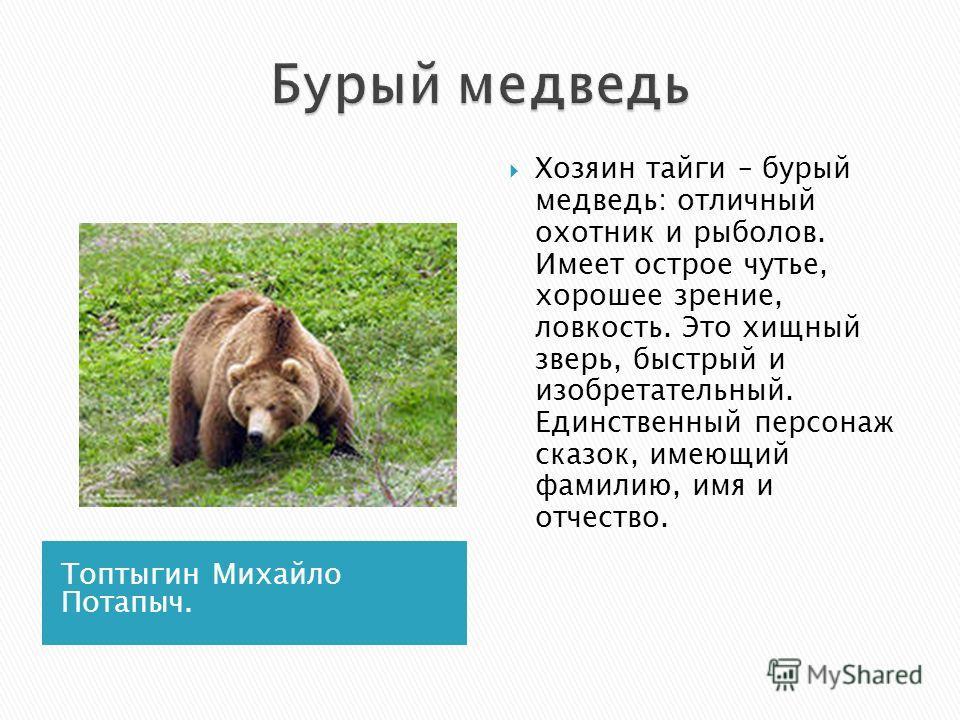 Топтыгин Михайло Потапыч. Хозяин тайги – бурый медведь: отличный охотник и рыболов. Имеет острое чутье, хорошее зрение, ловкость. Это хищный зверь, быстрый и изобретательный. Единственный персонаж сказок, имеющий фамилию, имя и отчество.