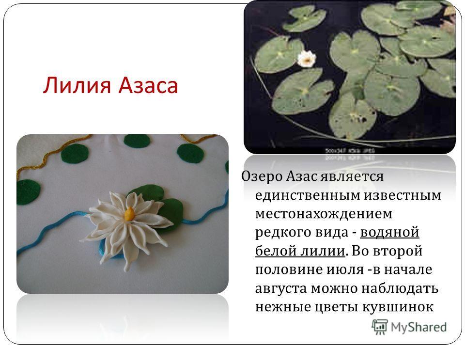Лилия Азаса Озеро Азас является единственным известным местонахождением редкого вида - водяной белой лилии. Во второй половине июля - в начале августа можно наблюдать нежные цветы кувшинок