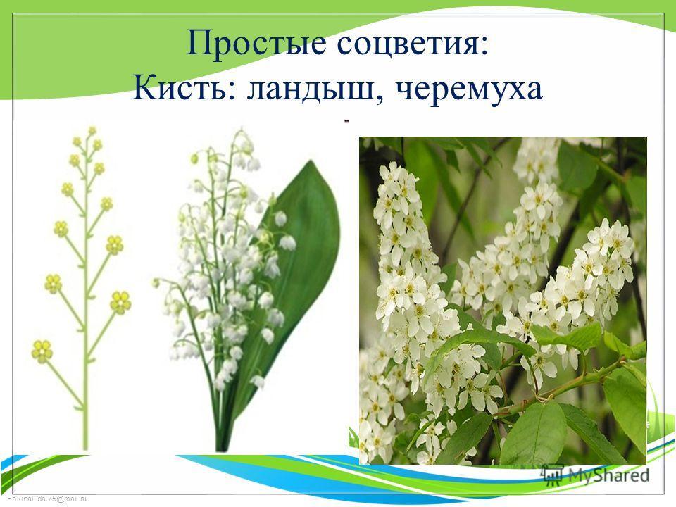 FokinaLida.75@mail.ru Простые соцветия: Кисть: ландыш, черемуха