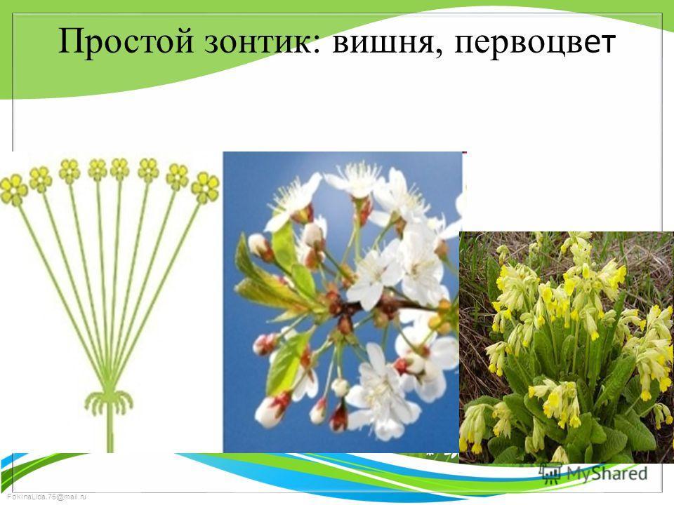 FokinaLida.75@mail.ru Простой зонтик: вишня, первоцв ет