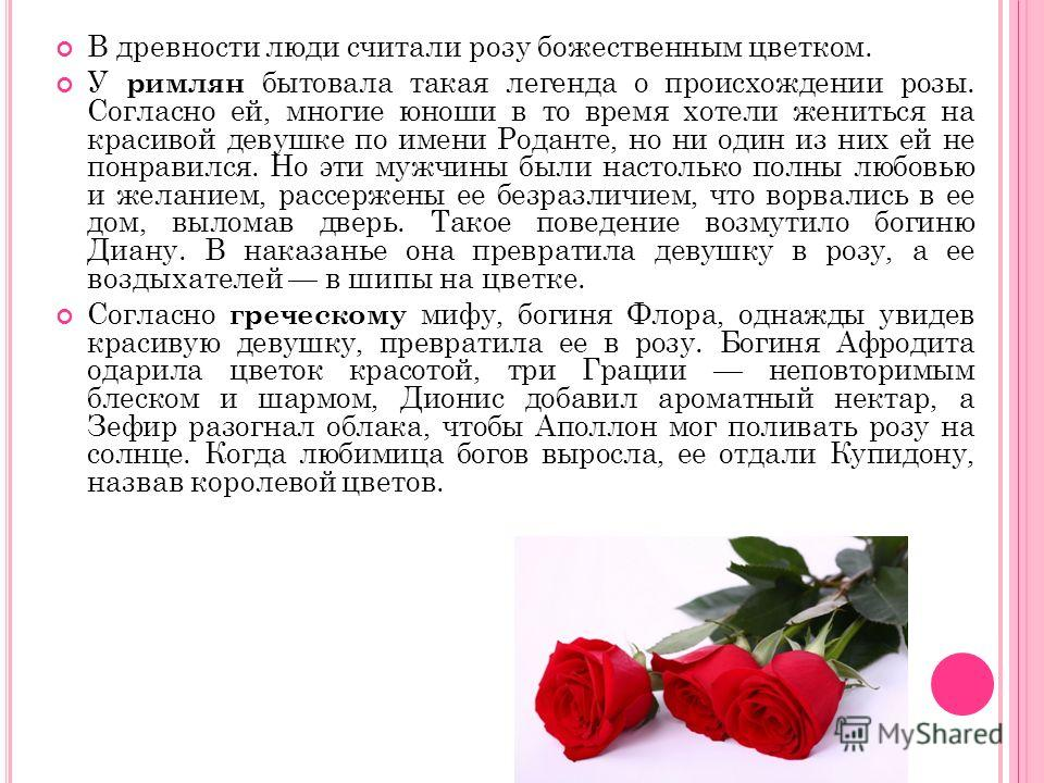 В древности люди считали розу божественным цветком. У римлян бытовала такая легенда о происхождении розы. Согласно ей, многие юноши в то время хотели жениться на красивой девушке по имени Роданте, но ни один из них ей не понравился. Но эти мужчины бы