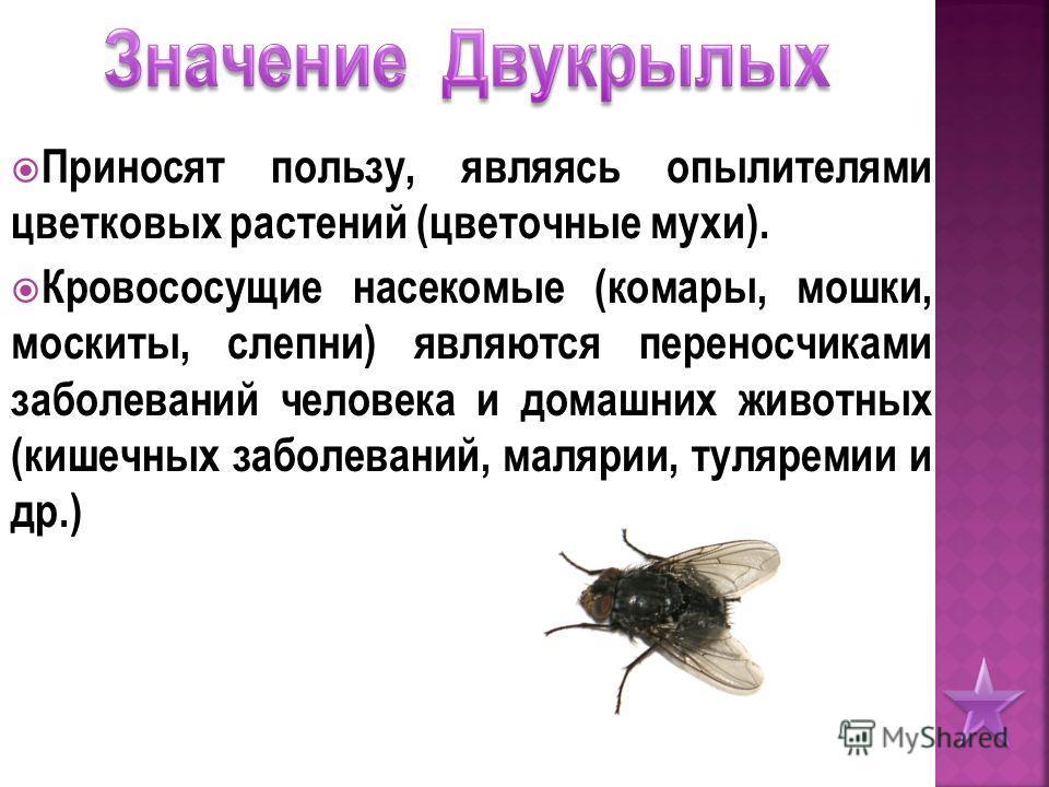 Приносят пользу, являясь опылителями цветковых растений (цветочные мухи). Кровососущие насекомые (комары, мошки, москиты, слепни) являются переносчиками заболеваний человека и домашних животных (кишечных заболеваний, малярии, туляремии и др.)
