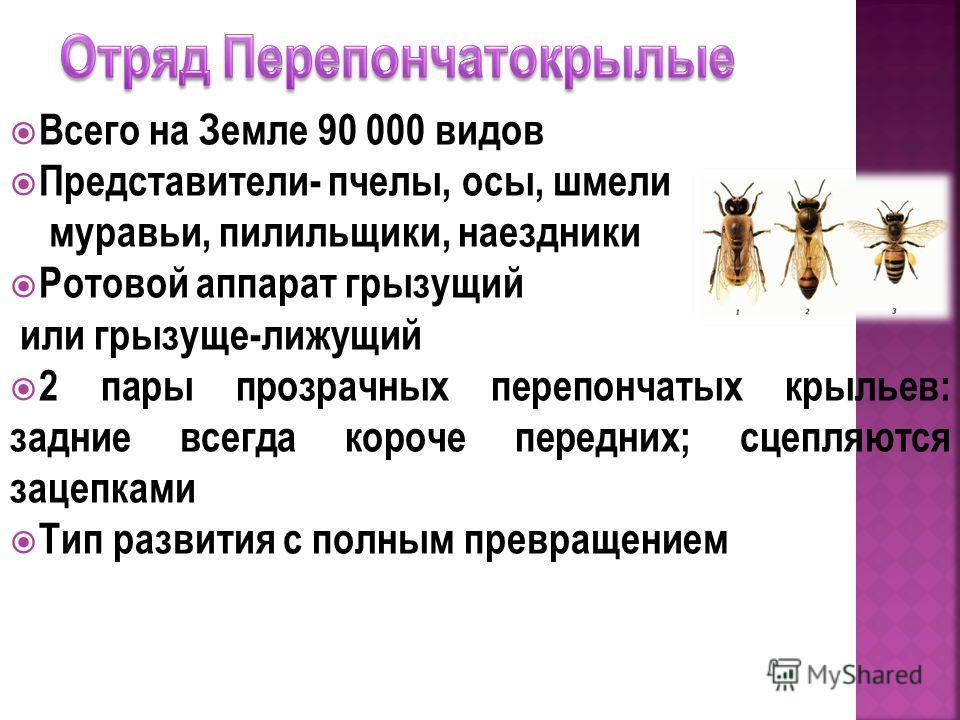 Всего на Земле 90 000 видов Представители- пчелы, осы, шмели муравьи, пилильщики, наездники Ротовой аппарат грызущий или грызуще-лижущий 2 пары прозрачных перепончатых крыльев: задние всегда короче передних; сцепляются зацепками Тип развития с полным