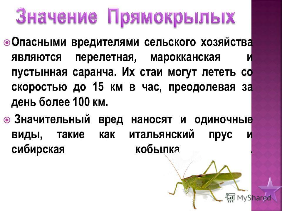 Опасными вредителями сельского хозяйства являются перелетная, марокканская и пустынная саранча. Их стаи могут лететь со скоростью до 15 км в час, преодолевая за день более 100 км. Значительный вред наносят и одиночные виды, такие как итальянский прус