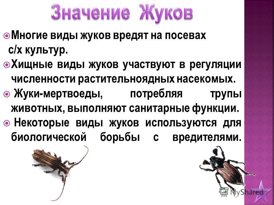 Многие виды жуков вредят на посевах с/х культур. Хищные виды жуков участвуют в регуляции численности растительноядных насекомых. Жуки-мертвоеды, потребляя трупы животных, выполняют санитарные функции. Некоторые виды жуков используются для биологическ
