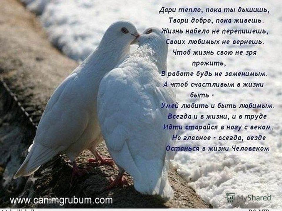 Голуби считаются любимыми птицами Венеры. Они всю жизнь не меняют пару и совместно заботятся о птенцах. Эти птицы - символы верности и любви, а также символы дня Святого Валентина.