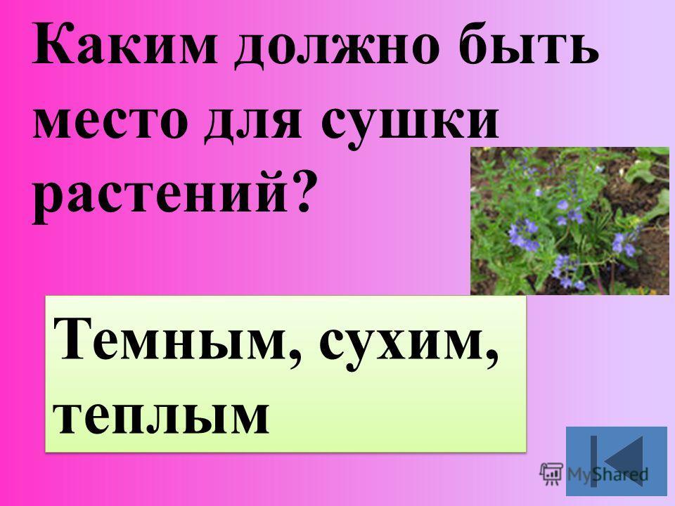 Каким должно быть место для сушки растений? Темным, сухим, теплым Темным, сухим, теплым