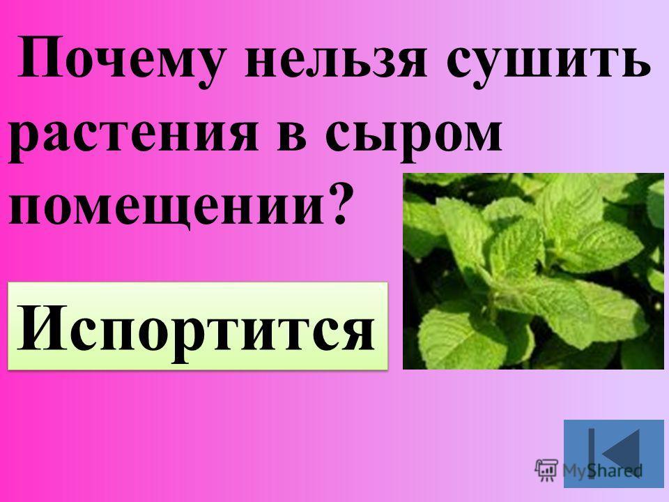 Почему нельзя сушить растения в сыром помещении? Испортится