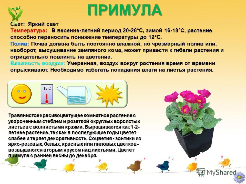 ПРИМУЛА ПРИМУЛА Свет: Яркий свет Температура: В весенне-летний период 20-26°C, зимой 16-18°C, растение способно переносить понижение температуры до 12°C. Полив: Почва должна быть постоянно влажной, но чрезмерный полив или, наоборот, высушивание земля