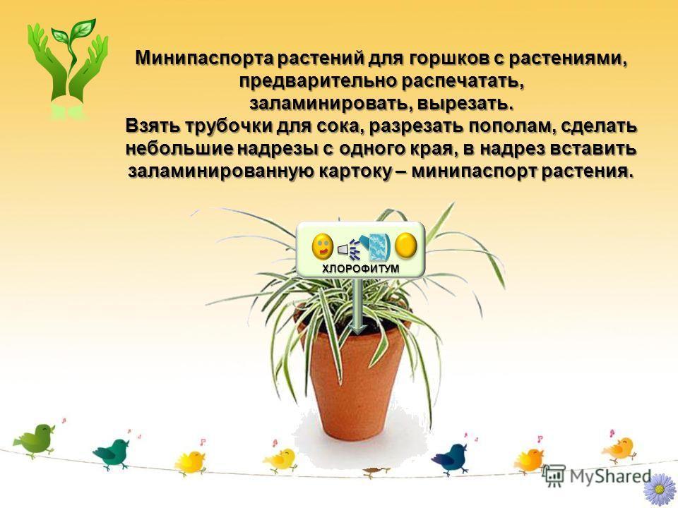 Минипаспорта растений для горшков с растениями, предварительно распечатать, заламинировать, вырезать. Взять трубочки для сока, разрезать пополам, сделать небольшие надрезы с одного края, в надрез вставить заламинированную картоку – минипаспорт растен