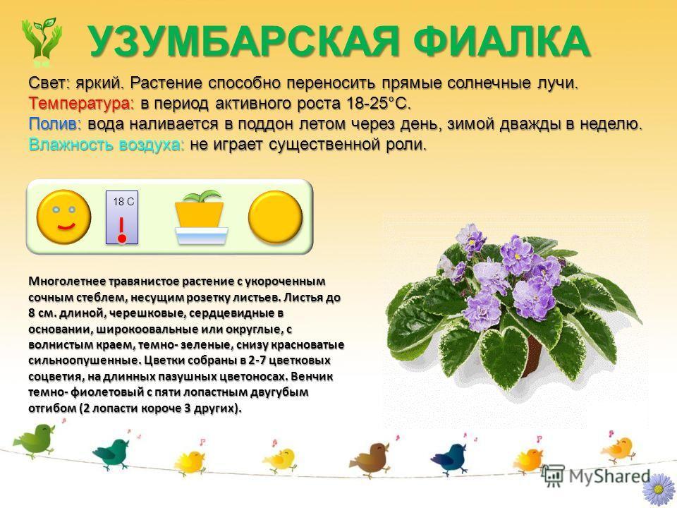 """Презентация на тему: """"Паспорт комнатных растений. 1.ФИАЛКА, 2.РЕО, 3.САНСЕВЬЕРА, 4.ФИКУС, 5.ГЕРАНЬ, 6.НЕФРОЛЕПИС, 7.ПРИМУЛА, 8.Б"""