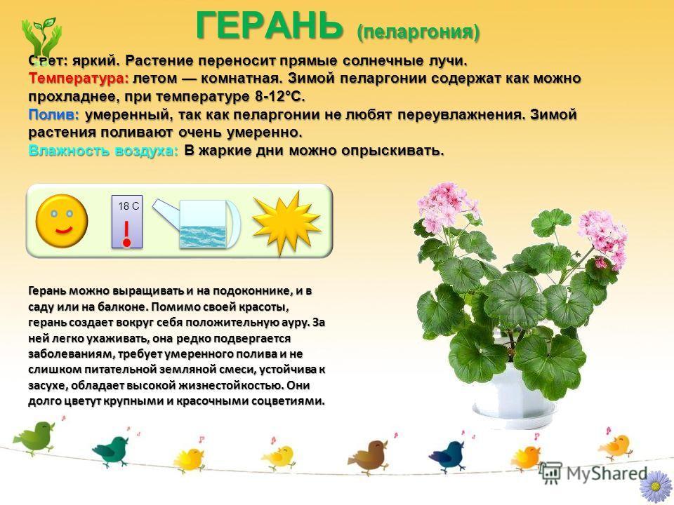 18 С ГЕРАНЬ (пеларгония) Герань можно выращивать и на подоконнике, и в саду или на балконе. Помимо своей красоты, герань создает вокруг себя положительную ауру. За ней легко ухаживать, она редко подвергается заболеваниям, требует умеренного полива и