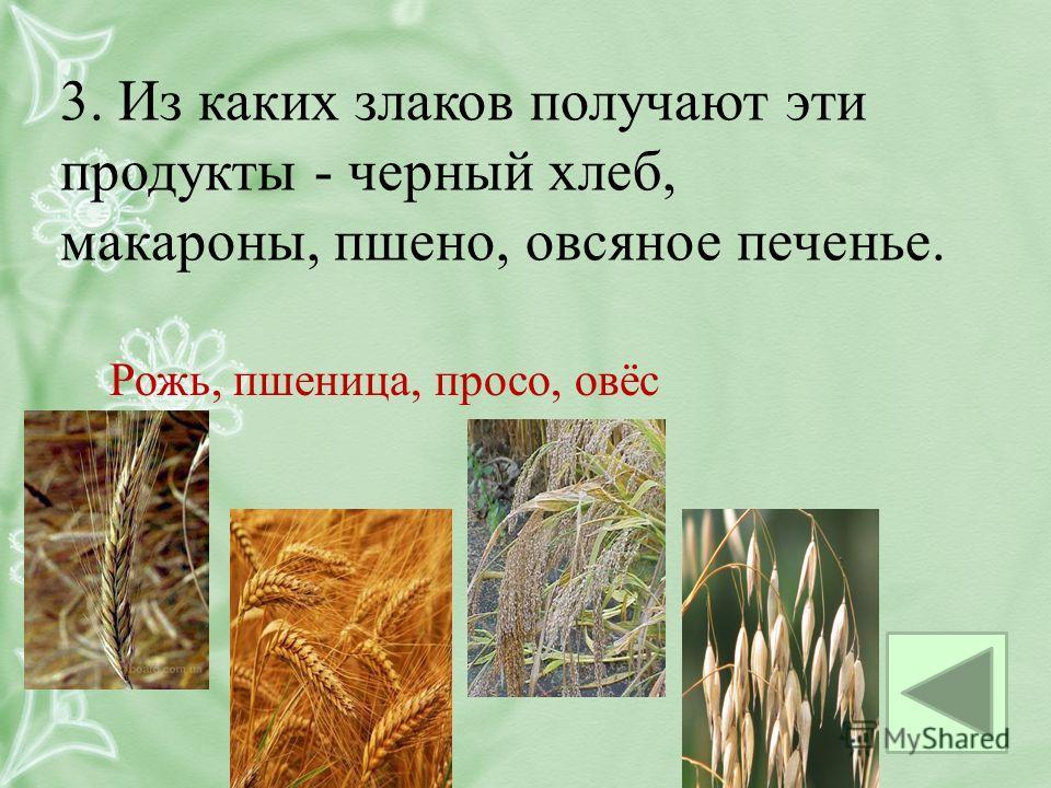3. Из каких злаков получают эти продукты - черный хлеб, макароны, пшено, овсяное печенье. Рожь, пшеница, просо, овёс