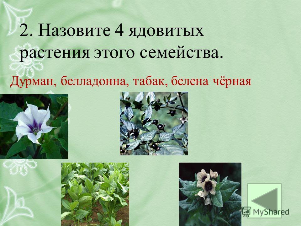 2. Назовите 4 ядовитых растения этого семейства. Дурман, белладонна, табак, белена чёрная