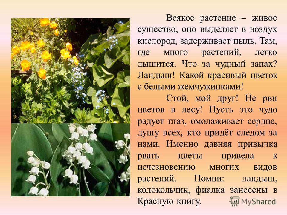 Всякое растение – живое существо, оно выделяет в воздух кислород, задерживает пыль. Там, где много растений, легко дышится. Что за чудный запах? Ландыш! Какой красивый цветок с белыми жемчужинками! Стой, мой друг! Не рви цветов в лесу! Пусть это чудо