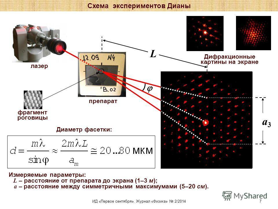 L Дифракционные картины на экране препарат лазер фрагмент роговицы Измеряемые параметры: L – расстояние от препарата до экрана (1–3 м); а – расстояние между симметричными максимумами (5–20 см). a3a3 Диаметр фасетки: Схема экспериментов Дианы ИД «Перв