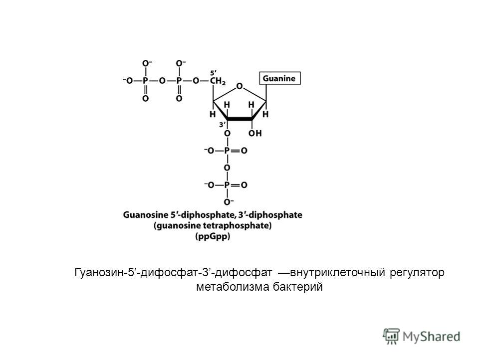 Гуанозин-5-дифосфат-3-дифосфат внутриклеточный регулятор метаболизма бактерий