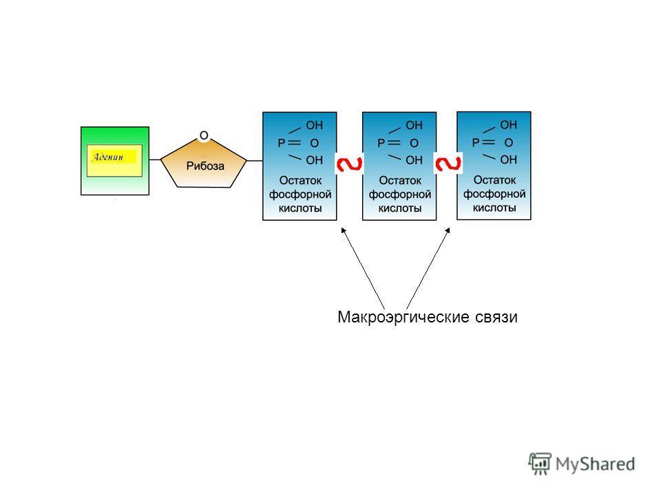Макроэргические связи