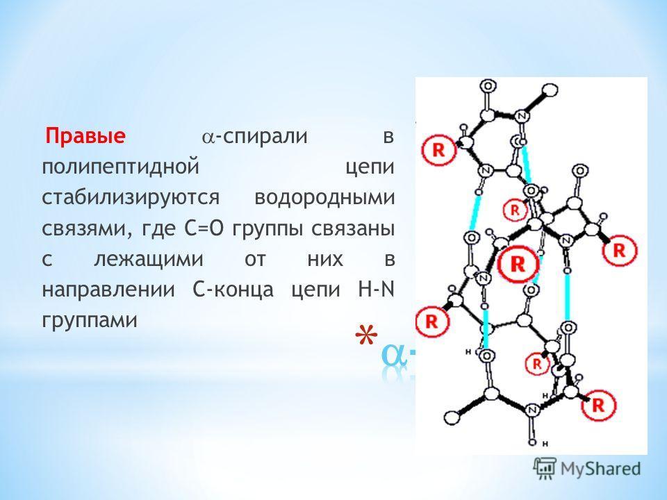 Правые -спирали в полипептидной цепи стабилизируются водородными связями, где С=О группы связаны с лежащими от них в направлении С-конца цепи H-N группами
