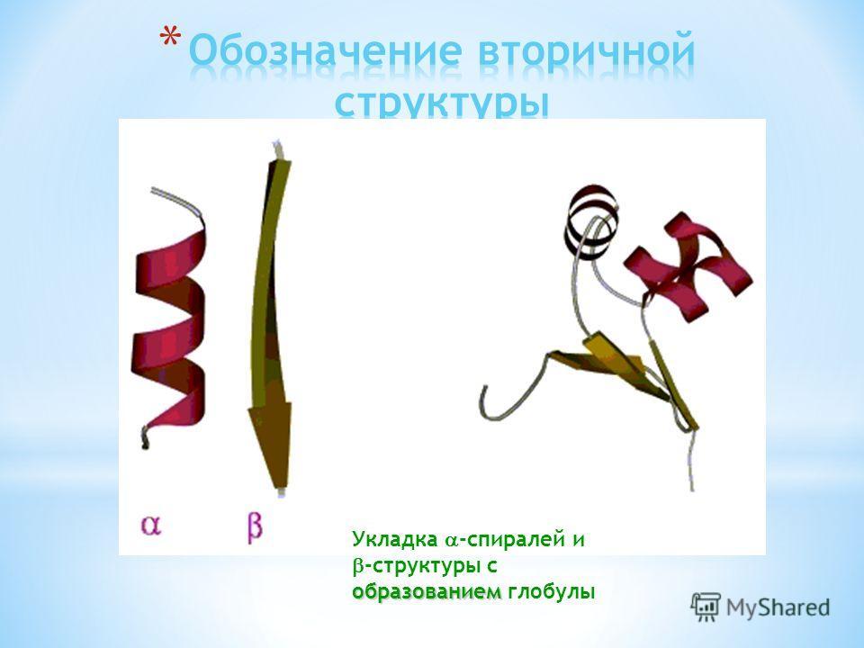 Укладка -спиралей и образованием -структуры с образованием глобулы